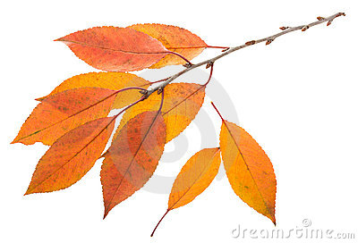 Twig with orange leaves