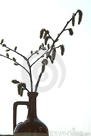Twig pussy-willow in vase