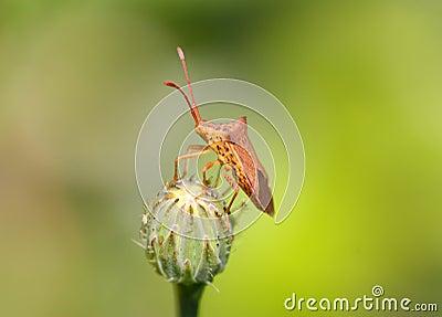 Twig Wilter Bug