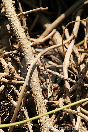 Free Twigs Stock Photography - 6518102