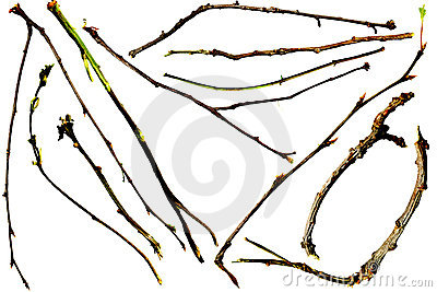 Twigs and Branches
