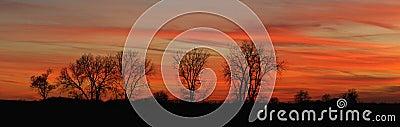 Twilight tree line (Panoramic)