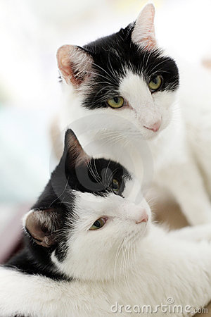Free Twin Cats Royalty Free Stock Photography - 10699447