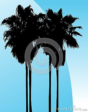 Twin Palm Trees