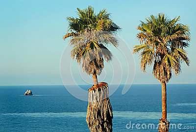 Twin Palm Trees