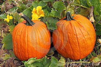 Twin Pumpkins