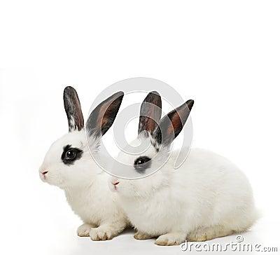 Free Twin Rabbits Royalty Free Stock Photography - 4198487