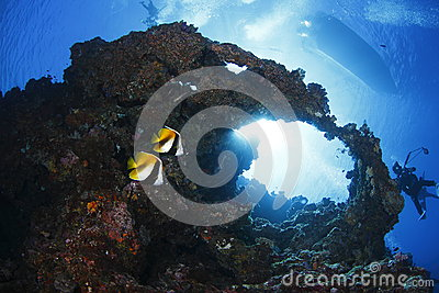 Twins Butterflyfish