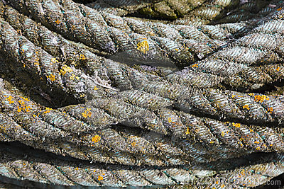Twisted fibre rope