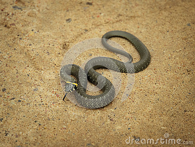 Twisted grass snake