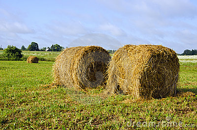 Twisted haystack in meadow animal feed for winter