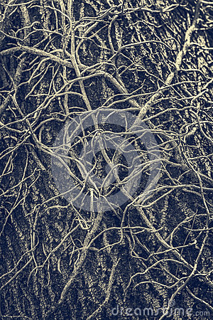 Free Twisted Leafless Vines Creeper Stock Photos - 59033823