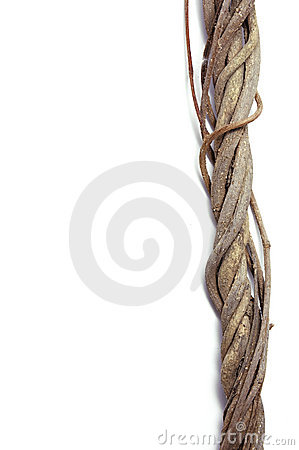 Free Twisted Roots Stock Photos - 12888653
