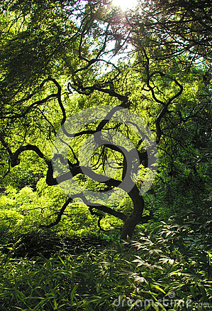 Twisted Squiggly Branches