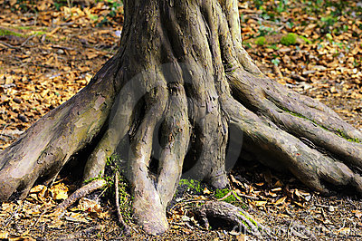 Twisted trunk of tree