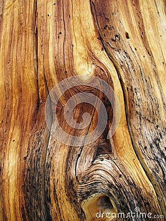 Free Twisted Wood Grain Stock Photo - 4565930
