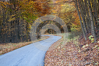 Twisting Autumn road
