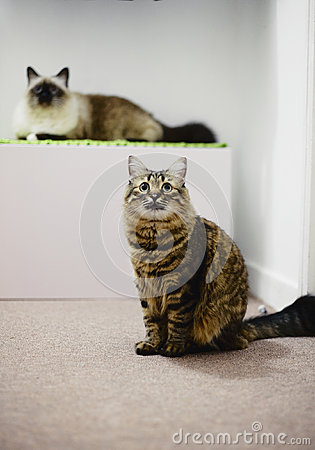 Two adult cats