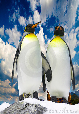 Two antarctic penguins