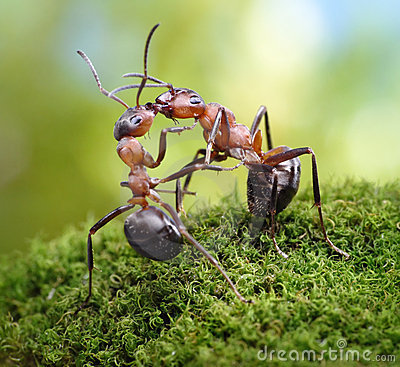 Two ants, warm greetings look like kiss