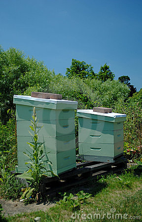 Two Apiaries for Beekeeping