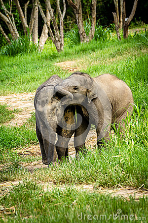 Free Two Baby Elephants Playing In Grassland Field. Royalty Free Stock Images - 25846829