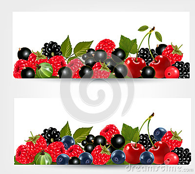 Two banners with delicious ripe berries.
