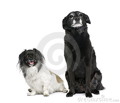 Two bastard dogs in front of white background