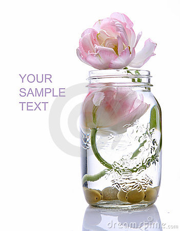 Free Two Beautiful Tulips In A Glass Vase Royalty Free Stock Image - 14300716