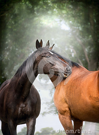 Free Two  Beautiful Warm-blood Dressage Horses Scratching Each Over Big Tree Nature Background Royalty Free Stock Photo - 55977535