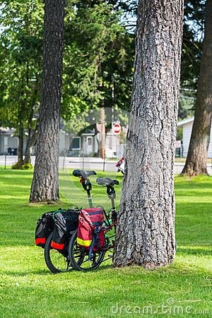Two Bikes against Tree