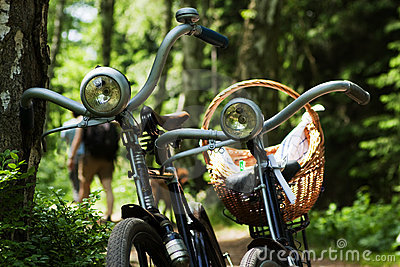 Two bikes in forest