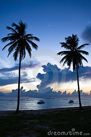 Two black palm on night beach