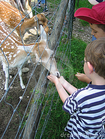 Free Two Boys Feed An Animal Royalty Free Stock Images - 1935889