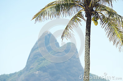 Two Brothers Mountain Rio de Janeiro Brazil Palm Tree