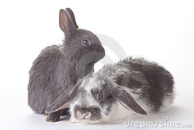 Two bunny, isolated