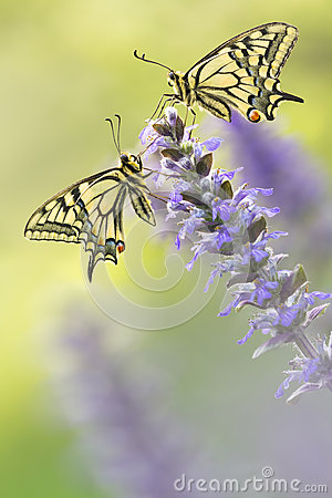 Free Two Butterflies In Nature On Flower Stock Photos - 58772673