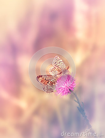Free Two Butterflies On The Flower Stock Images - 49315174