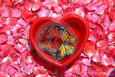 Two butterflys and heart