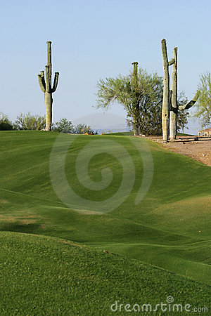 Free Two Cactus On A Golf Course Royalty Free Stock Photo - 5905845