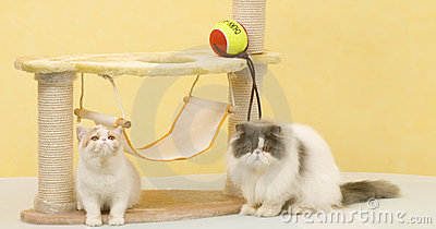 Two cat
