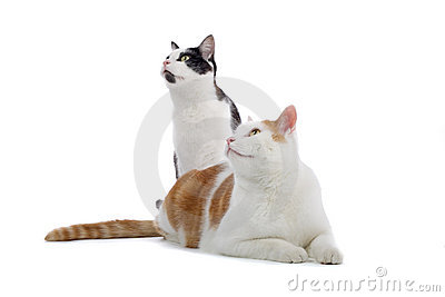 Two cats looking into distance