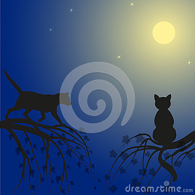 Free Two Cats On Tree Royalty Free Stock Images - 73451709
