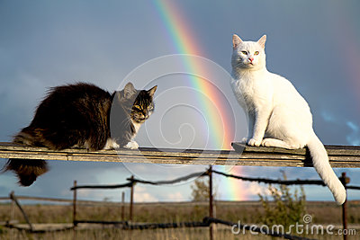 Two cats and rainbow