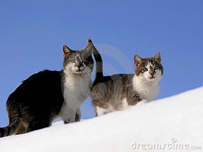 Two cats in snow