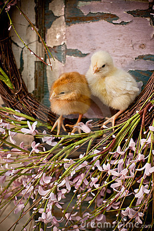 Two chicks on easter wreath