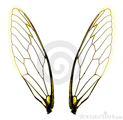 Free Two Cicada Wings Royalty Free Stock Photos - 3247248