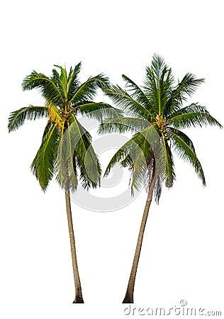 Free Two Coconut Palm Trees  On White Stock Photos - 76093273