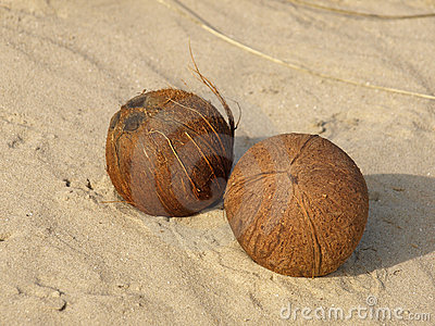 Two coconuts.