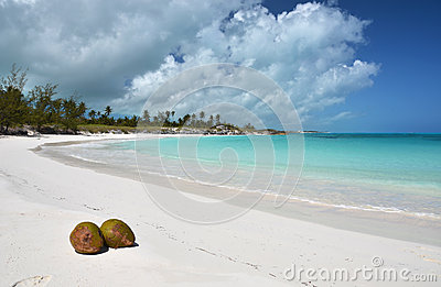 Two coconuts on a desert beach